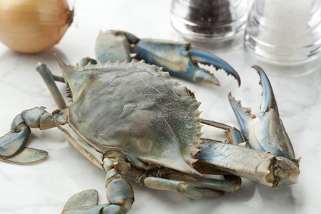 blue crab: Single blue crab ready to cook