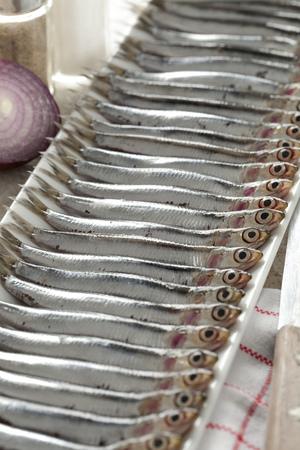 engraulis encrasicolus: Row of fresh European anchovies on a dish