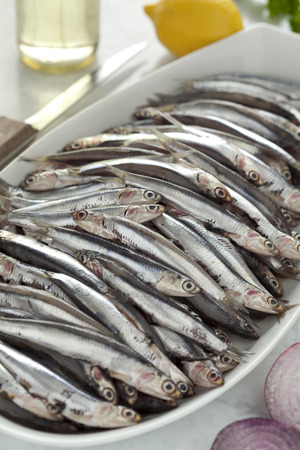 engraulis: Fresh European anchovies on a dish ready to cook