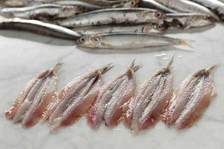 engraulis: Fresh cleaned European anchovies