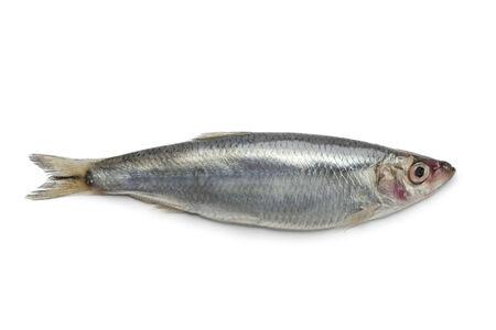 sprat: Fresh raw European sprat on white background