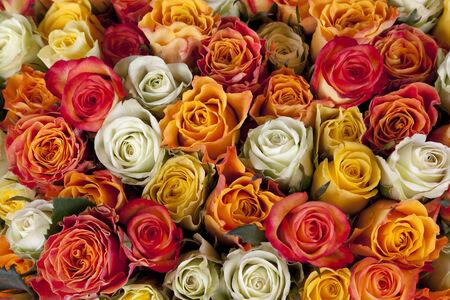 rosas amarillas: Blancos, amarillos y rosas rosas marco completo
