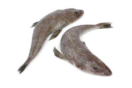 flathead: Pair of fresh raw dusky flathead fishes on white background Stock Photo