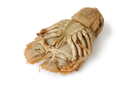 flathead: Bottom of a cooked flathead lobster on white background