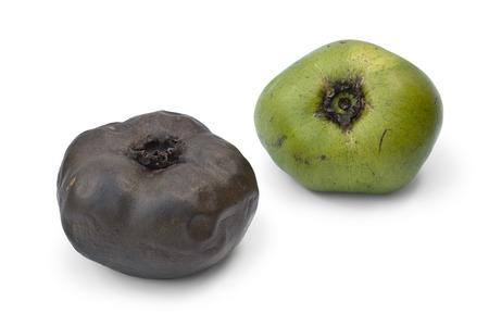 persimmon: Madura y inmadura fruta de zapote negro sobre fondo blanco Foto de archivo