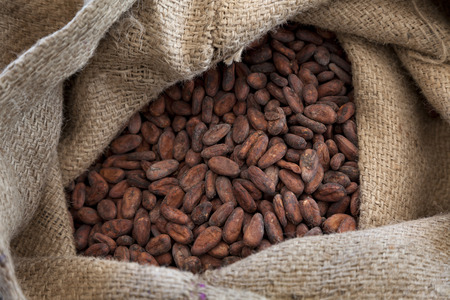 Jute bag full with cocoa beans photo