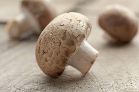 agaricus: Fresh chestnut mushroom close up