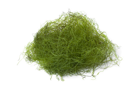 filamentous: Heap of fresh filamentous green algaeas