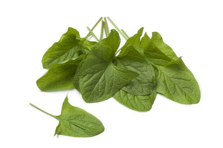 green vegetable: Fresh green Good-King-Henry vegetable leaves on white background