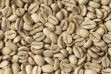 unroasted: Malabar green unroasted coffee beans from India full frame Stock Photo