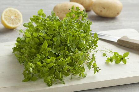 chickweed: Heap of fresh green chickweed on a cutting board
