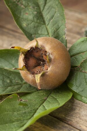 seasonable: Fresh medlar and leaves close up