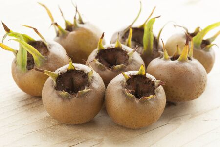 seasonable: Fresh  picked medlars close up