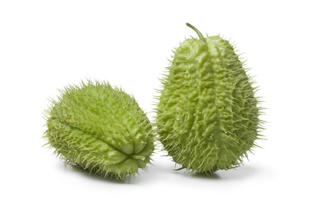 chayote: Whole spined fresh chayote fruit on white background