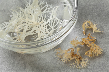 soaked: Soaked irish moss in a bowl