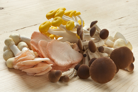 Variety of fresh raw edible mushrooms, oyster mushrooms,horse mushrooms and pioppino mushrooms