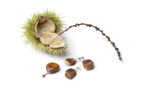 outs: Sweet chestnut seeds on white background