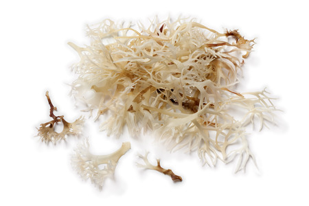 Soaked irish moss on white background