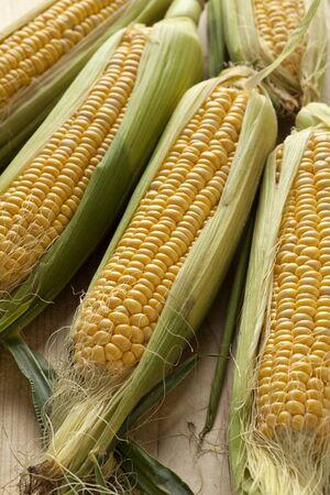 yellow corn: Fresh raw yellow corn on the cob Stock Photo