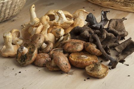 hongo: Variedad de setas frescas recogido Foto de archivo