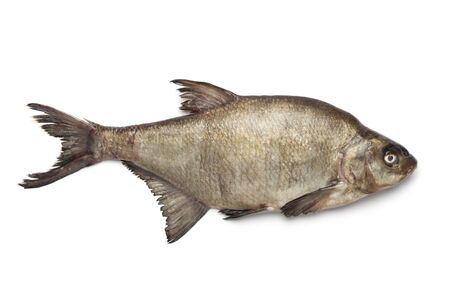 abramis: Fresh raw common bream on white background