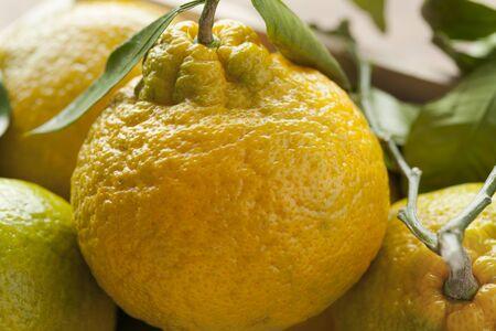 citrus reticulata: Fresh picked ripe organic mandarins Stock Photo