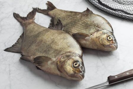 abramis: Fresh caught raw common breams Stock Photo
