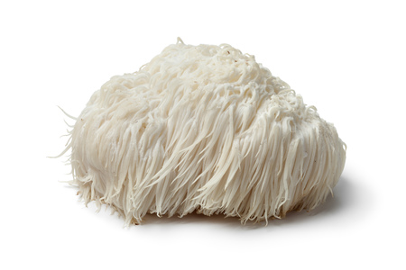 Single Lion's mane mushroom on white background Foto de archivo