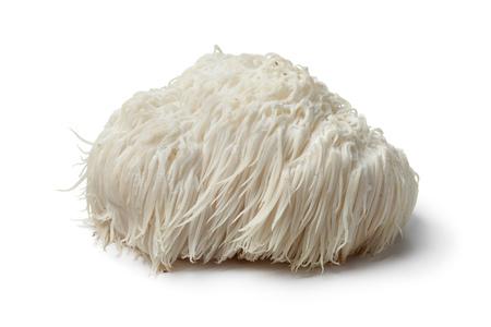Single Lion's mane mushroom on white background Archivio Fotografico