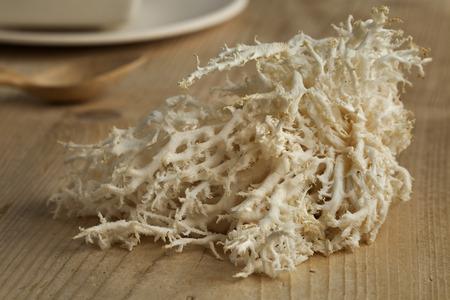 the fungus: Fresh white edible coral fungus Stock Photo