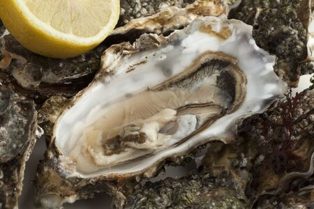 edible: Close up of an open fresh raw pacific oyster ready to eat Stock Photo