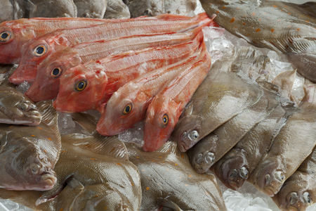 plaice: Variety of different fresh raw fishes on ice
