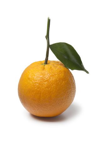 fresh leaf: Single whole fresh orange with a leaf on white background