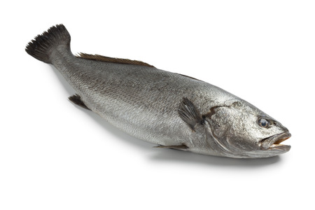 meagre: Fresh raw corvina fish on white background