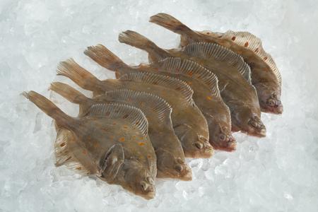 plaice: Fresh raw European plaice fishes on ice