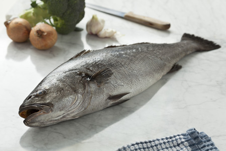 meagre: Fresh raw corvina fish in the kitchen Stock Photo