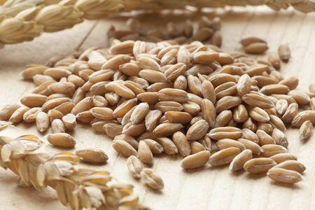 spelt: Heap of raw Spelt wheat  on white background