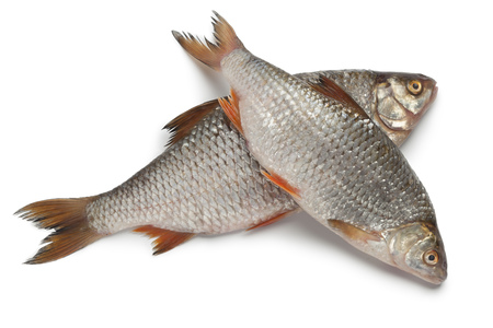 brackish water: Pair of fresh raw common roach on white background