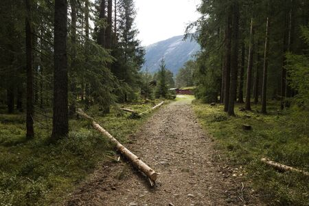 walking path: Walking path in the forest, Setesdal, Norway Stock Photo