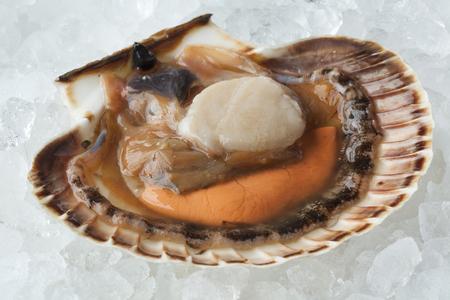 noix saint jacques: Crème de pépites crue fraîche sur glace dans la coquille close up Banque d'images