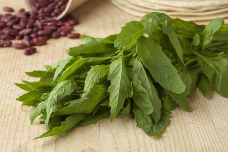 Bunch of fresh raw green epazote Standard-Bild