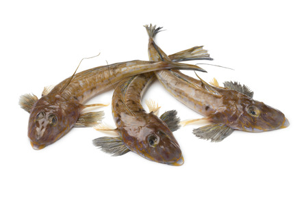 Fresh raw flathead fishes isolated on white background
