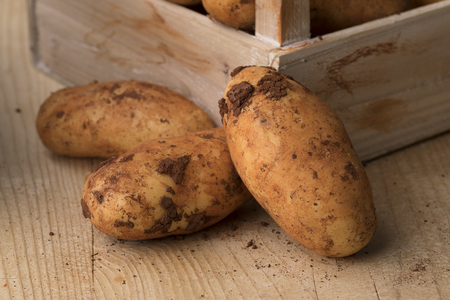 Fresh picked raw whole Diamant potatoes from Cyprus