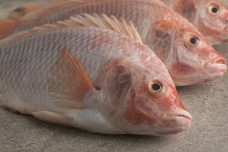 Fresh raw red tilapia fishes close up Stock Photo