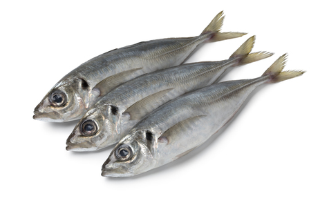 Fresh caught raw horse mackerels isolated on white background
