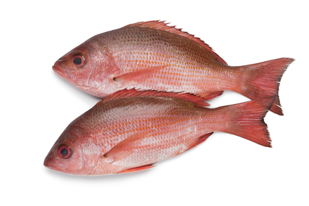 Two fresh raw Northern red snappers isolated on white background Foto de archivo - 127194538