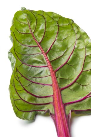 Red stemmed chard leaf close up at white background