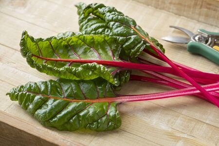 Fresh picked red stemmed chard and leaves Stock Photo