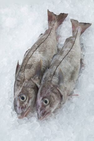 Fresh raw whole haddock fish cooled on ice