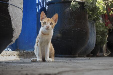Portrait of an alert red striped cat watching people passing by